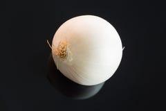 3 всех свежих сырцовых белых лука Стоковые Изображения RF
