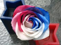 Все американское Роза красного цвета, белых & голубых Стоковое фото RF