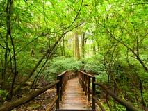 все валы карандаша ладони ландшафта джунглей чертежа Парк Doi Inthanon, Таиланд Стоковые Фотографии RF