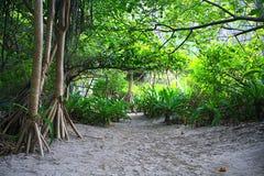 все валы карандаша ладони ландшафта джунглей чертежа Стоковое Фото