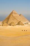 все верблюды выравнивают прогулку пирамидок вертикальную Стоковое Изображение RF
