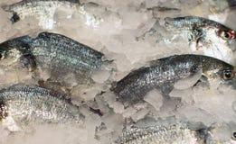 Все виды замороженных рыб Стоковое Изображение