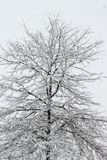 все все предметы иллюстрации элементов индивидуальные вычисляют по маштабу снежок размера к вектору вала Стоковая Фотография