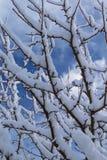 все все предметы иллюстрации элементов индивидуальные вычисляют по маштабу снежок размера к вектору вала Стоковое Изображение RF