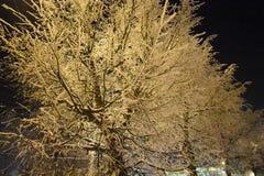 Все деревья покрыты с снегом Света в городе светят ярко Ландшафт ночи в витрине зарева расстояния Стоковая Фотография