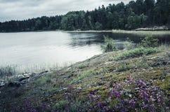 Все еще ландшафт озера в холодном летнем дне Стоковые Фотографии RF