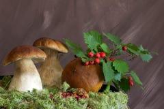 Все еще боярышник, клюквы и грибы жизни стоковое фото