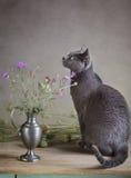 Все еще жизнь с котом Стоковые Фотографии RF