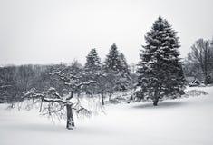 Все еще сцена зимы Стоковая Фотография RF