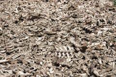 Все косточки мертвого животного Стоковое Изображение