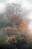 все листья холма над красным цветом Стоковое Фото