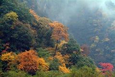 все листья холма над красным цветом Стоковые Изображения RF