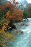 все листья холма над красным цветом Стоковая Фотография RF