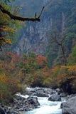 все листья холма над красным цветом Стоковое фото RF