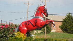 Все лошади Оклахомы повсеместно в положение Стоковые Изображения