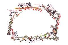 все все предметы флористической иллюстрации элементов предпосылки осени индивидуальные вычисляют по маштабу текстуры размера для  Стоковое Изображение RF
