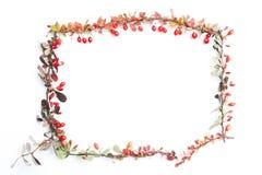 все все предметы флористической иллюстрации элементов предпосылки осени индивидуальные вычисляют по маштабу текстуры размера для  Стоковые Фотографии RF