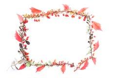 все все предметы флористической иллюстрации элементов предпосылки осени индивидуальные вычисляют по маштабу текстуры размера для  Стоковое фото RF