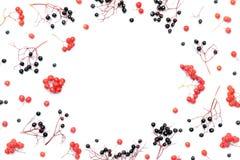 все все предметы флористической иллюстрации элементов предпосылки осени индивидуальные вычисляют по маштабу текстуры размера для  Стоковые Фото