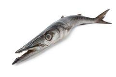 все рыб баррачуды свежее Стоковое Изображение RF