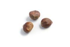 Все семена каштанов стоковые изображения rf