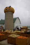 Все специальные тыквы хеллоуина, тыквы, сквош и индийская мозоль вам нужно украсить на ваш любимый праздник в октябре Стоковое Изображение
