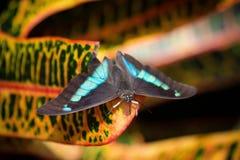 Все цвета в природе Стоковые Изображения