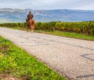 Вскользь всадник лошади Стоковое Фото