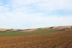 Вспаханная и зеленая обрабатываемая земля пшеничного поля Стоковое фото RF