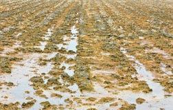 вспаханная почва Стоковые Фотографии RF