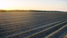 Вспаханное поле после культивирования для засаживать аграрные урожаи Ландшафт с аграрным краем Кровати для заводов Земледелие, стоковые фото
