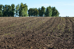 Вспаханное поле для засаживать Стоковая Фотография RF