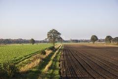 Вспаханные поле и вал Стоковые Фото