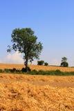 Вспаханные поля в Cotswolds Стоковая Фотография RF