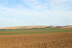 Вспаханный и зеленый ландшафт обрабатываемой земли пшеничного поля Стоковая Фотография RF