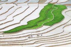 Вспахивать террасные поля Стоковое Фото