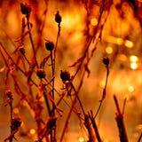 Вспоминающ Pushkin… Стоковые Фото