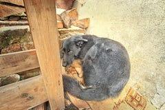 Вспугнутая собака под таблицей Стоковые Изображения RF