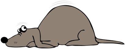 вспугнутая собака Стоковое Изображение RF