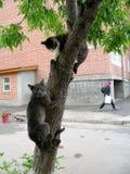 вспугнутые коты Стоковое Фото