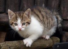 вспугнутый котенок стоковые изображения
