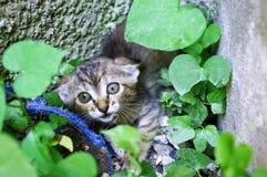 вспугнутый котенок Стоковое Изображение