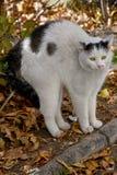 вспугнутый кот стоковые изображения