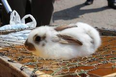 вспугнутый кролик стоковые фото