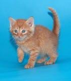 Вспугнутый пушистый котенок имбиря на сини Стоковые Изображения