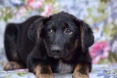 Вспугнутый щенок дворняжки Стоковая Фотография