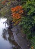 Вспышки гениальных цветов вдоль банков Duwamish Rive стоковая фотография rf