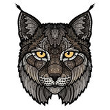 Вспыльчивым голова рыся изолированная талисманом Стоковые Фото