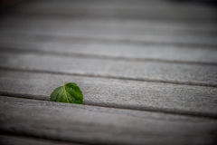 Вставленные лист березы стоковое фото