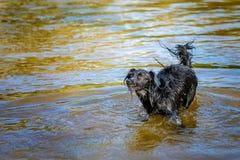 Встречайте Донну, шавку, бездомную собаку найденную в луге на греческом острове Лесбоса Стоковые Изображения RF